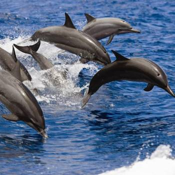 Dolphin Search Trip